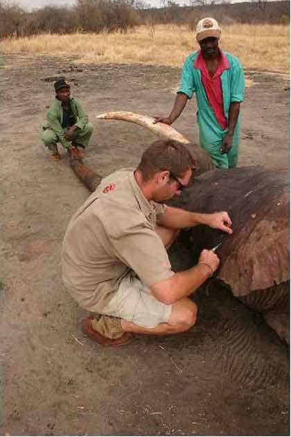 Elephant-Antidote-Being-Revived