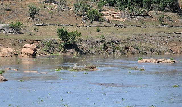 Elephant-river-crossing-no-more-now-drinking-water-Wildmoz.com